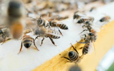 Worker Bee Syndrome